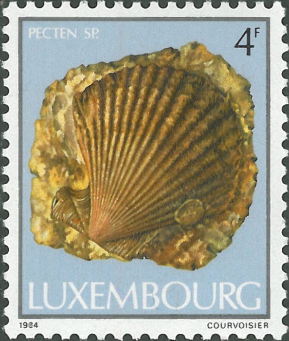 Pecten sp.