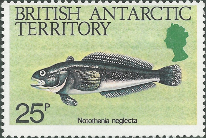 Notothenia neglecta