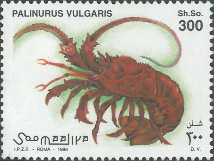 Palinurus vulgaris