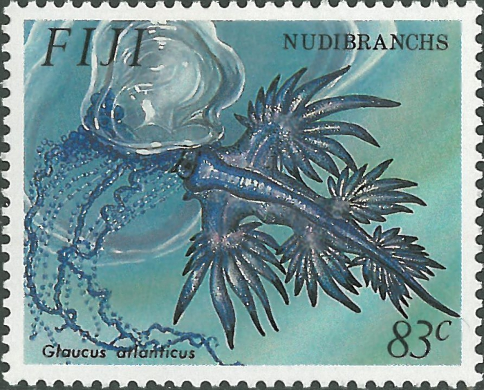 Glaucus atlanticus