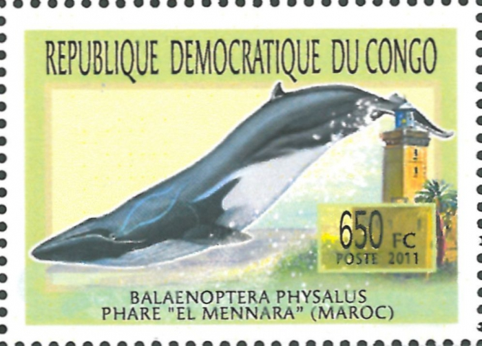 Balaenoptera physalus