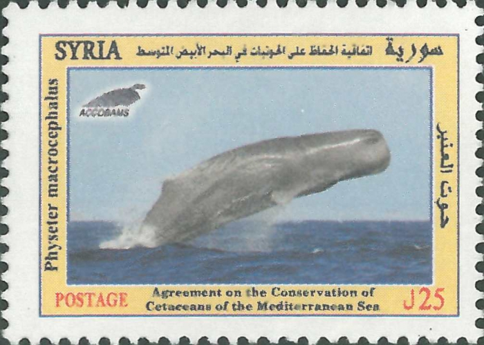 Physeter macrocephalus