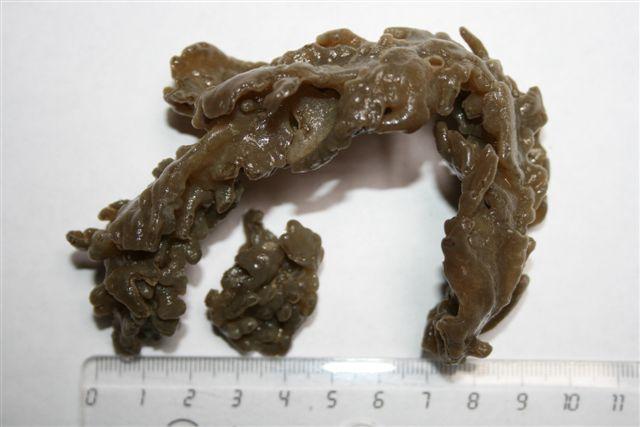 Bruine zeevinger