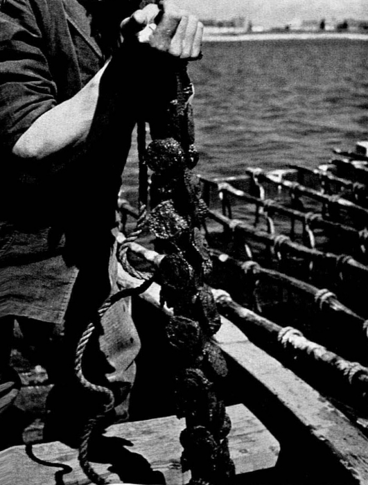 Graf (1957, foto 08)