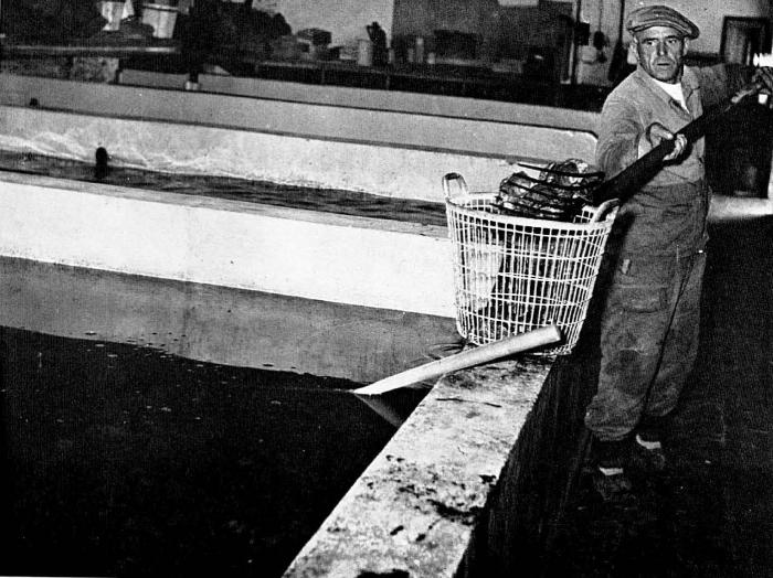 Graf (1957, foto 09)