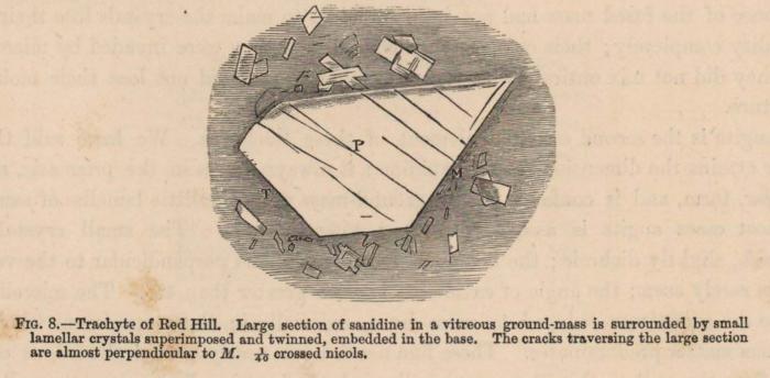 Renard (1888, fig. 08)