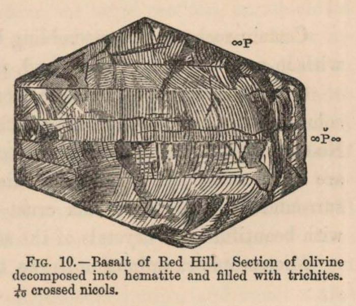 Renard (1888, fig. 10)