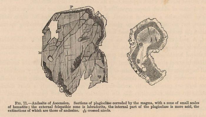 Renard (1888, fig. 11)