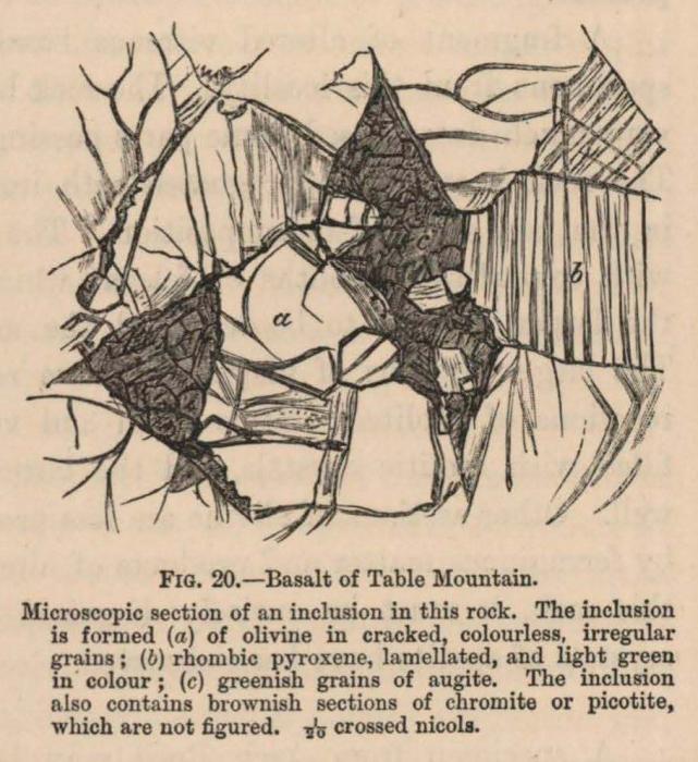 Renard (1888, fig. 20)