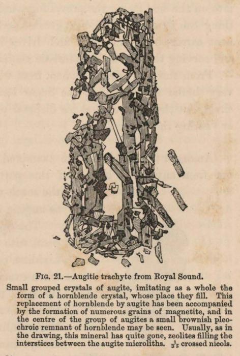 Renard (1888, fig. 21)