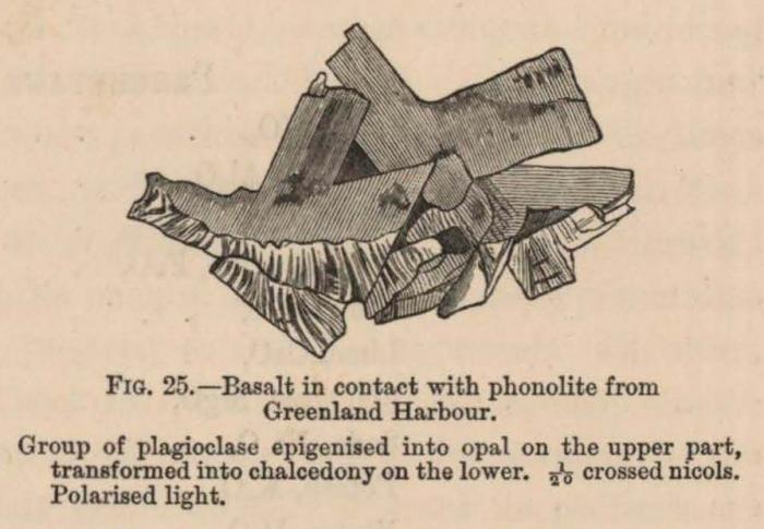 Renard (1888, fig. 25)