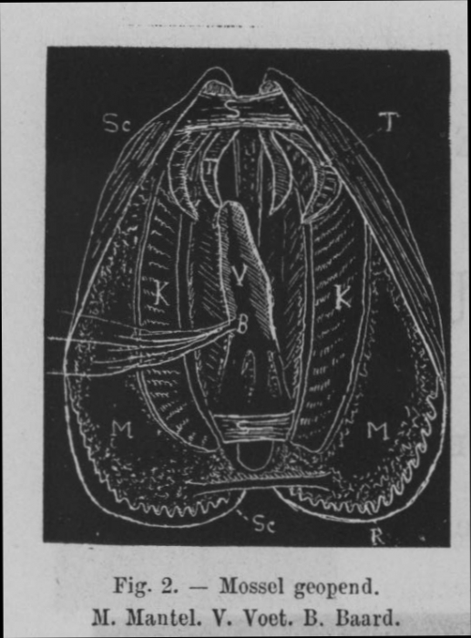Eben (1884, figuur 2)