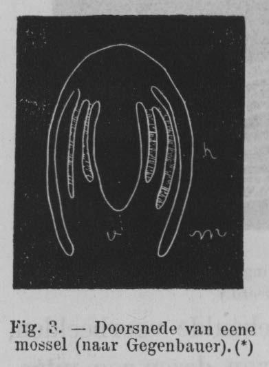 Eben (1884, figuur 3)