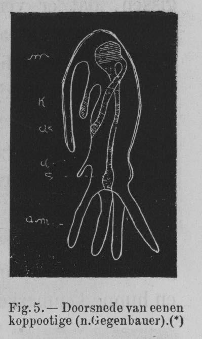 Eben (1884, figuur 5)