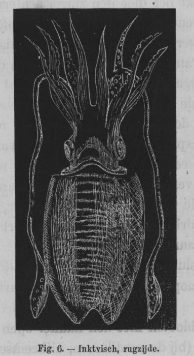 Eben (1884, figuur 6)