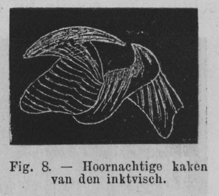 Eben (1884, figuur 8)