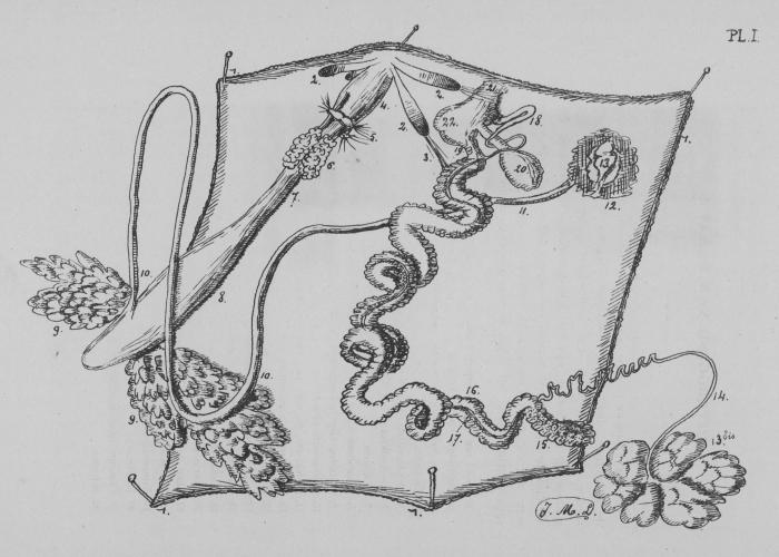 Eben (1884, plaat 1)