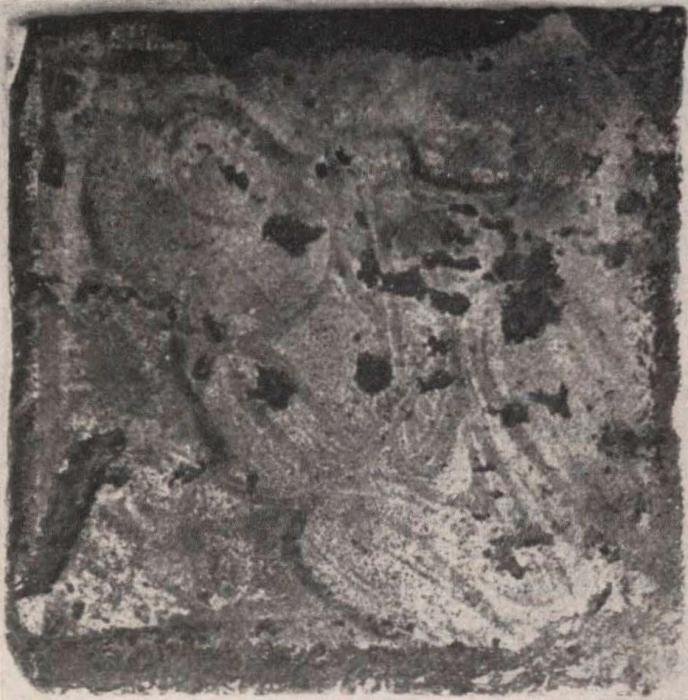 Schittekat (1958, fig. 19)
