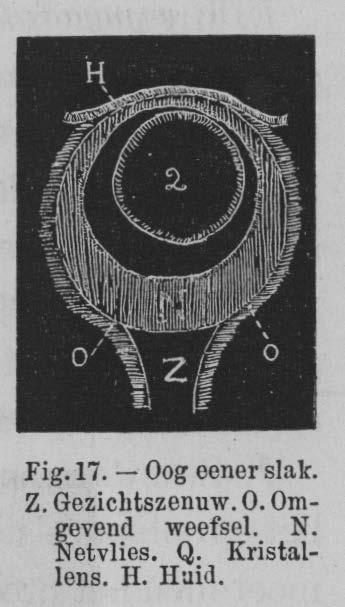 Eben (1884, figuur 17)