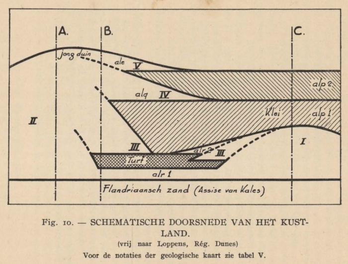 De Langhe (1939, fig. 10)