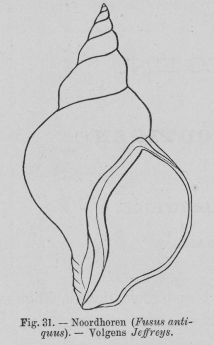 Eben (1884, figuur 31)