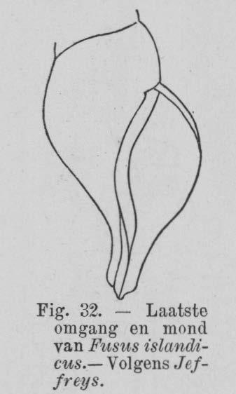 Eben (1884, figuur 32)