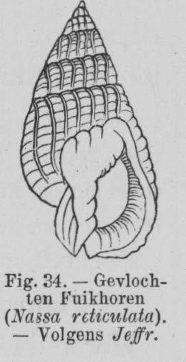 Eben (1884, figuur 34)