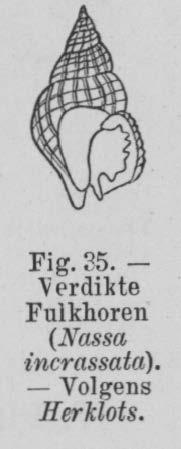 Eben (1884, figuur 35)