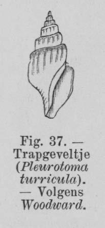 Eben (1884, figuur 37)