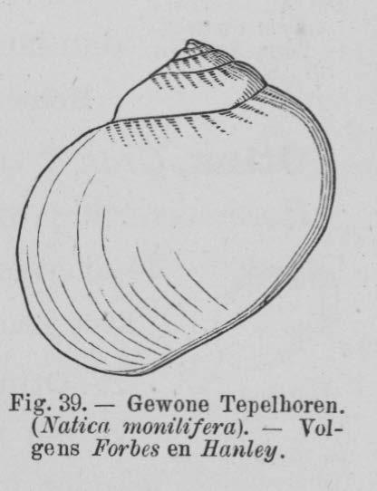 Eben (1884, figuur 39)