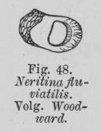 Eben (1884, figuur 48)