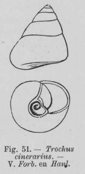 Eben (1884, figuur 51)