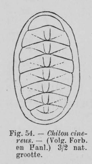 Eben (1884, figuur 54)