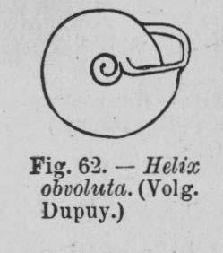 Eben (1884, figuur 62)