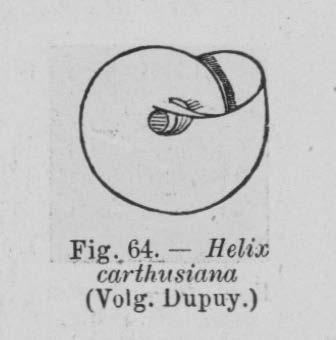 Eben (1884, figuur 64