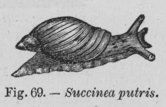 Eben (1884, figuur 69)