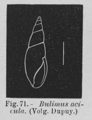 Eben (1884, figuur 71)