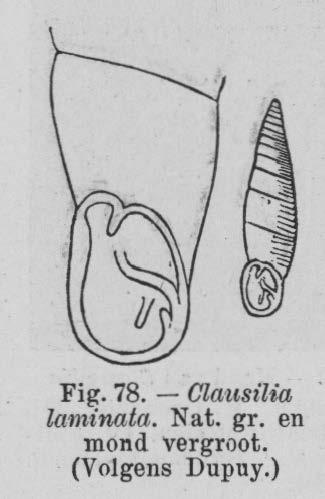 Eben (1884, figuur 78)