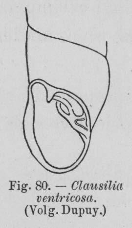 Eben (1884, figuur 80)