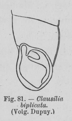 Eben (1884, figuur 81)