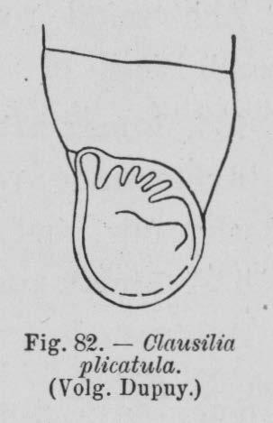 Eben (1884, figuur 82)