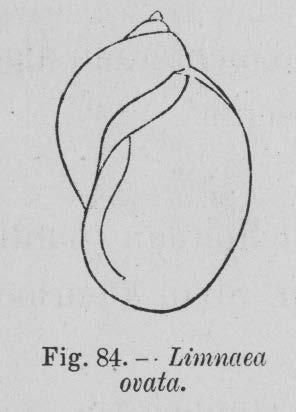 Eben (1884, figuur 84)