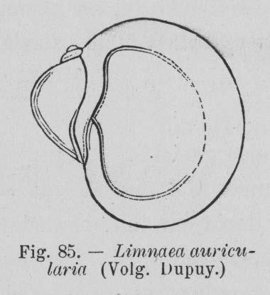 Eben (1884, figuur 85)