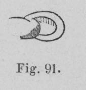 Eben (1884, figuur 91)