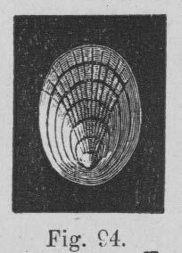 Eben (1884, figuur 94)