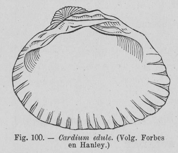 Eben (1884, figuur 100)