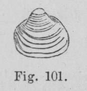 Eben (1884, figuur 101)