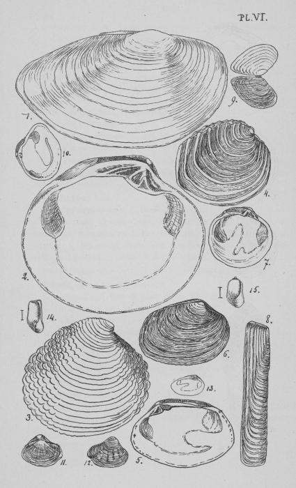 Eben (1884, plaat 6)