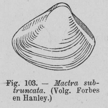 Eben (1884, figuur 103)