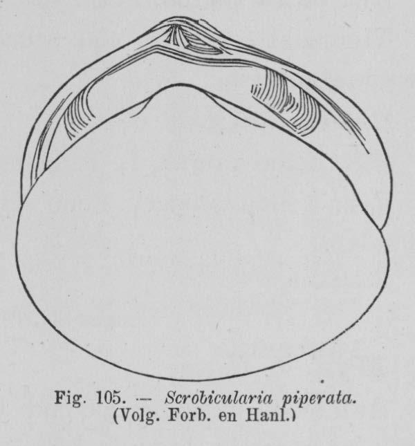 Eben (1884, figuur 105)